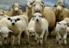 Какие животные могут заразиться коронавирусом, рассказали ученые