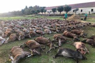 Испанские охотники устроили массовую резню оленей и кабанов в Португалии