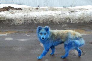 По улицам российского города разгуливают синие собаки. Откуда они взялись?