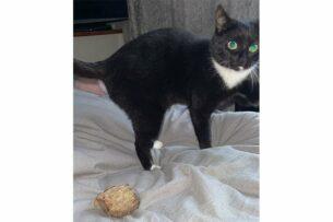 Кошка украла у соседа кусок жареного мяса и принесла хозяйке