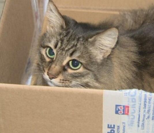 Бездомная кошка спасла ребенка, которого бросили в подвале. У животного материнские инстинкты оказались сильнее