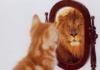 Почему стопроцентная уверенность — зло