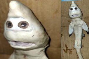Рыбак в Индонезии поймал странную акулу