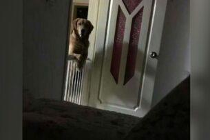 Семья взяла домой собаку из приюта, но была озадачена ее поведением ночью