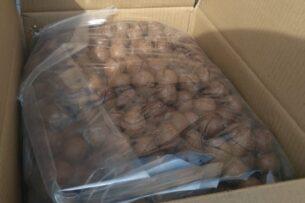 В Россию пытались ввезти из Кыргызстана 14 тонн австралийских орехов под видом китайских