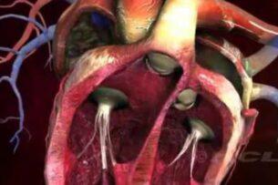 Ученые представили искусственные сердечные клапаны, которые могут расти вместе с сердцем