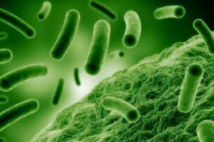 В кишечнике здорового человека обнаружено 140 000 ранее неизвестных вирусов