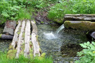 Фильтр из сосны очищает воду от бактерий на 99%