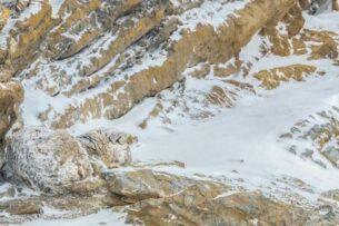 Фотограф  показал идеальную маскировку снежного барса