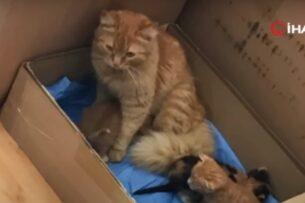 Бродячая кошка принесла в госпиталь больных котят: видео