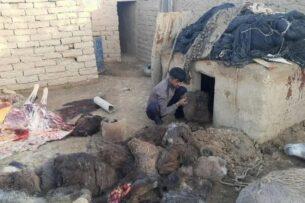 В Узбекистане обнаружена подпольная бойня, где забивали ослов. Мясо планировали продавать на рынке