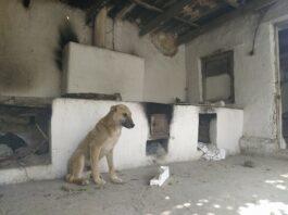 Одинокий щенок у разрушенного дом в селе Максат, странные надписи «ОМП» — печальная история из соцсетей