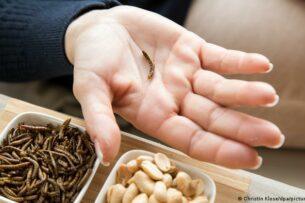 ЕС разрешил употребление сушеных мучных червей в пищу