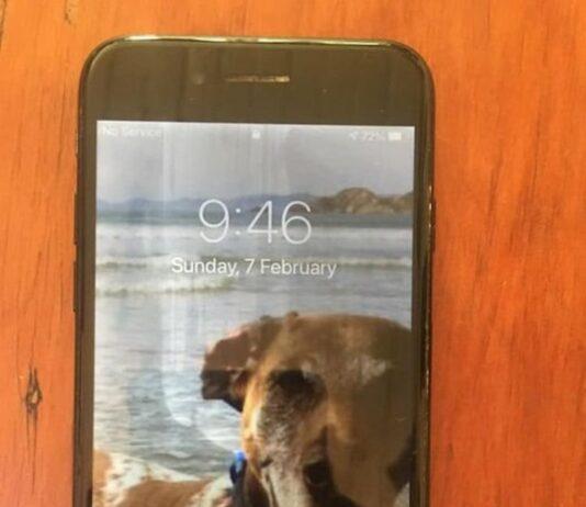 Фото собаки на заставке утонувшего телефона помогло найти его хозяина