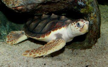 Пластик нашли даже в мышцах морских черепах. Загрязнение вышло на новый уровень