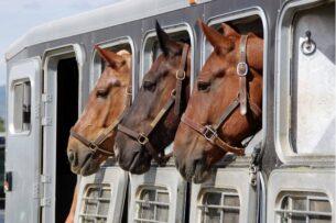 В России не пропустили в Кыргызстан лошадей из Кабардино-Балкарии