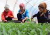 Программа GIZ по содействию устойчивому экономическому развитию в Кыргызстане подвела итоги