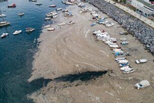 Мраморное море покрылось слизью