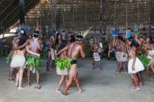 У амазонских индейцев обнаружили нестареющий мозг