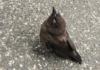 В США распространяется загадочная болезнь, ослепляющая и убивающая птиц