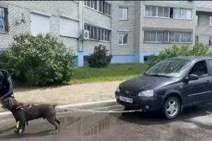 Пес из России установил новый мировой рекорд (видео)