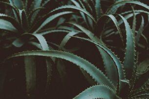 Названы лучшие растения-помощники для психики