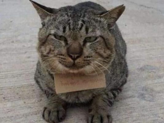 Кот ушел из дома, а через 3 дня вернулся с запиской, что у него теперь долги