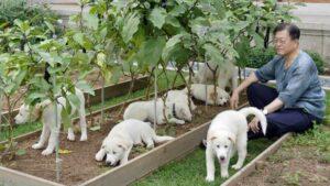 Президент Южной Кореи Мун Чжэ Ин известен своей любовью к собакам