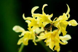 Ученые обнаружили растительное средство для лечения рака простаты