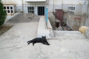 Для борьбы с расплодившимися грызунами жители Ашхабада прикармливают бродячих кошек