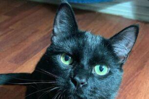Кот удивил Сеть дружбой с мышью, которую должен был поймать (видео)