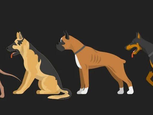 15 лучших пород собак для защиты