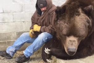 Мужчина подошел к грустному медведю, сел рядом и утешил его. Видео