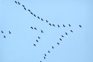 Скоро птицы перестанут летать на юг зимовать