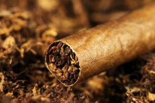 Люди могли употреблять табак более 12 тыс. лет назад